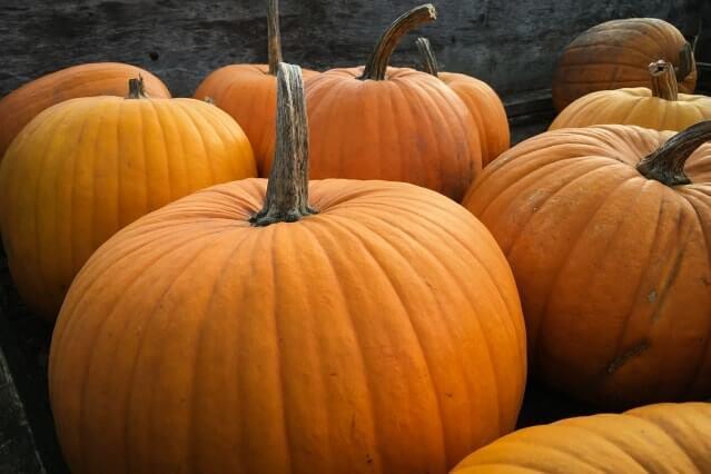 Pumpkins at Halloween for sensory blog